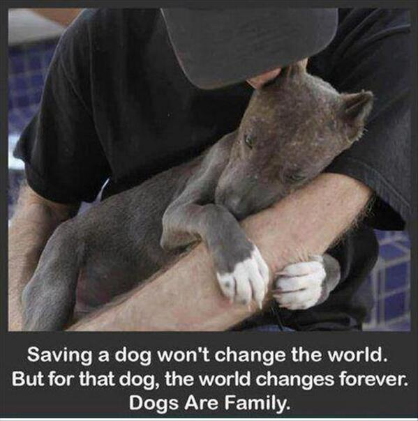animals showing compassion - photo #13