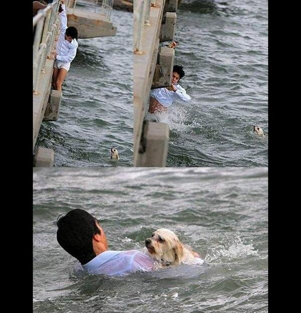 animals showing compassion - photo #9